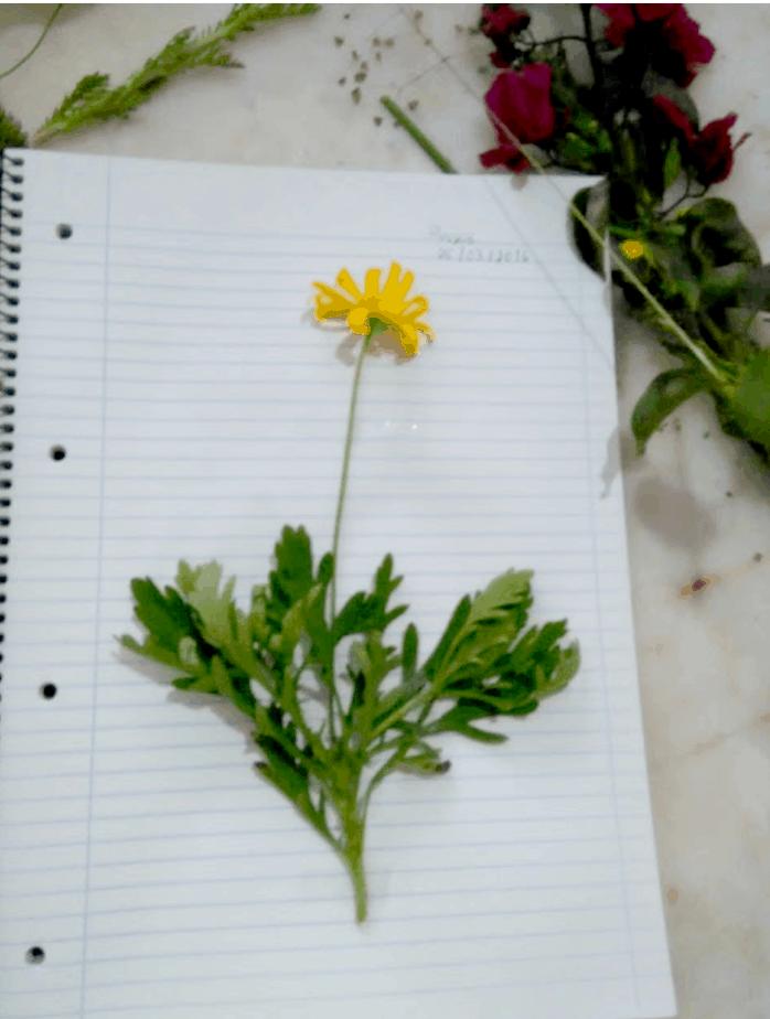 Uma coleção muito especial – Herbário