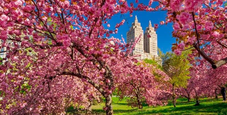 5 Dicas Para viajar na Primavera nava Iorque